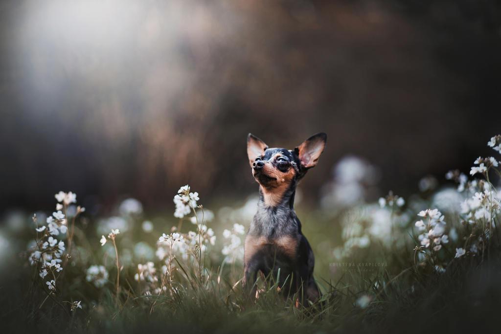 Little moody Letka by KristynaKvapilova