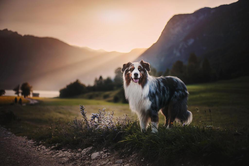 Beauty of Slovenia by KristynaKvapilova