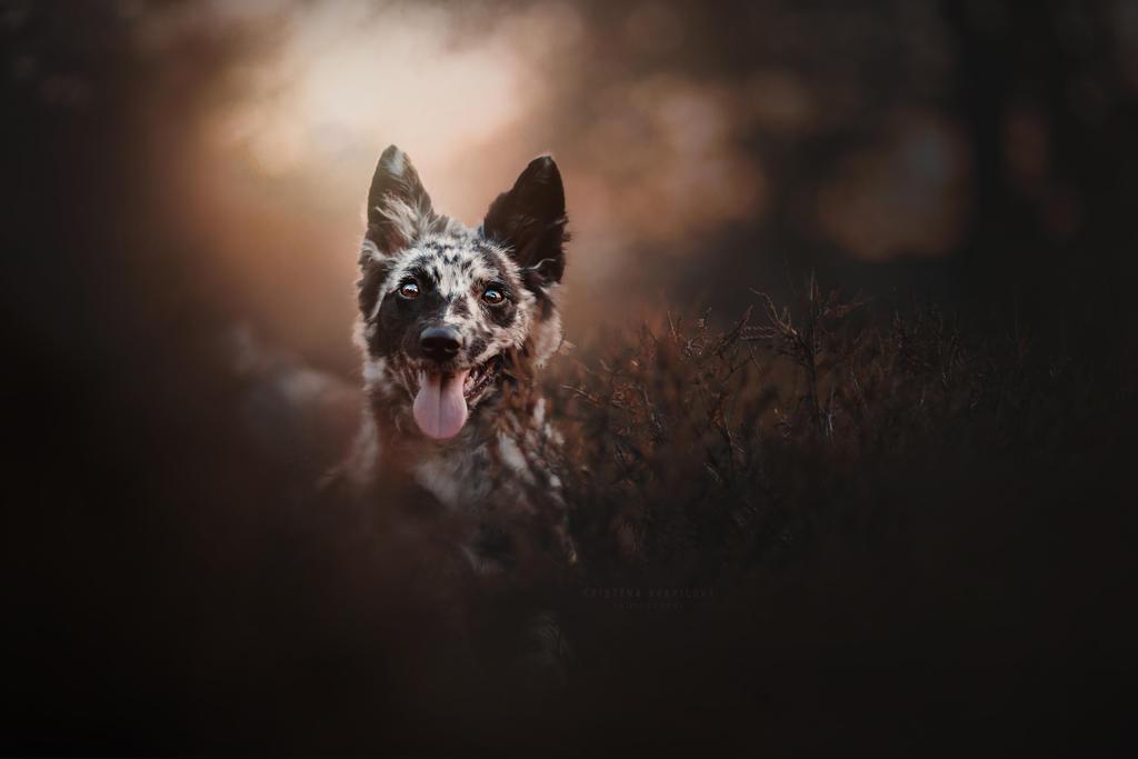 Portrait of Zazu by KristynaKvapilova