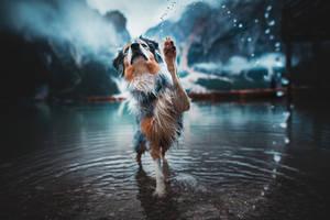 Paw up ! by KristynaKvapilova