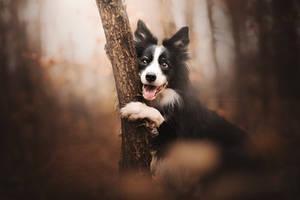 Autumn hug by KristynaKvapilova