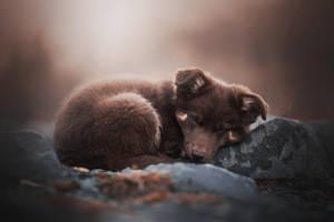 Hibernation of little teddy bear by KristynaKvapilova