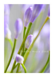 Abstract Nature- Flower 6