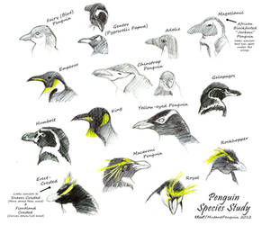 Penguin Species Study by MutantPenguin