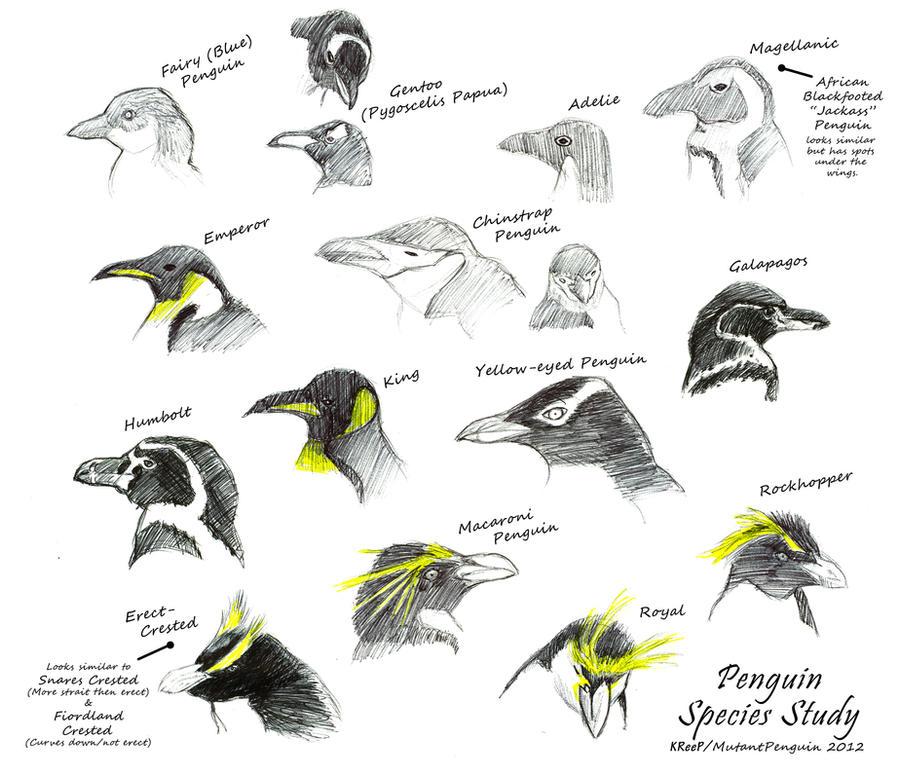 Penguin Species Study