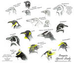 Penguin Species Study