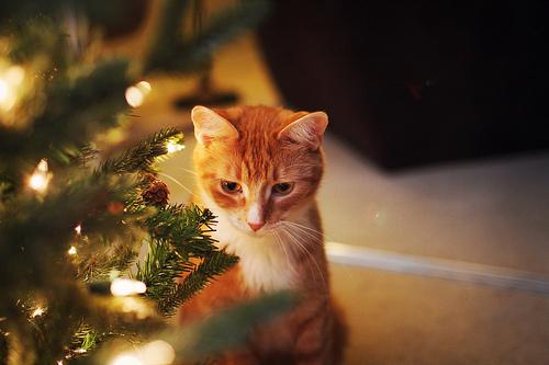 christmasssss by noodleroo