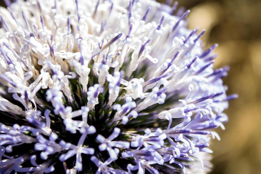 Flower by silverboy65