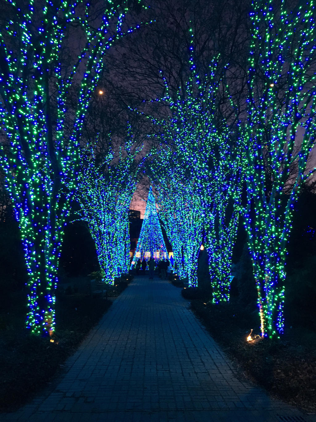 Atlanta Botanical Gardens Holiday Lights By Kevintheman On Deviantart