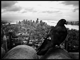 The Pigeon by deylac