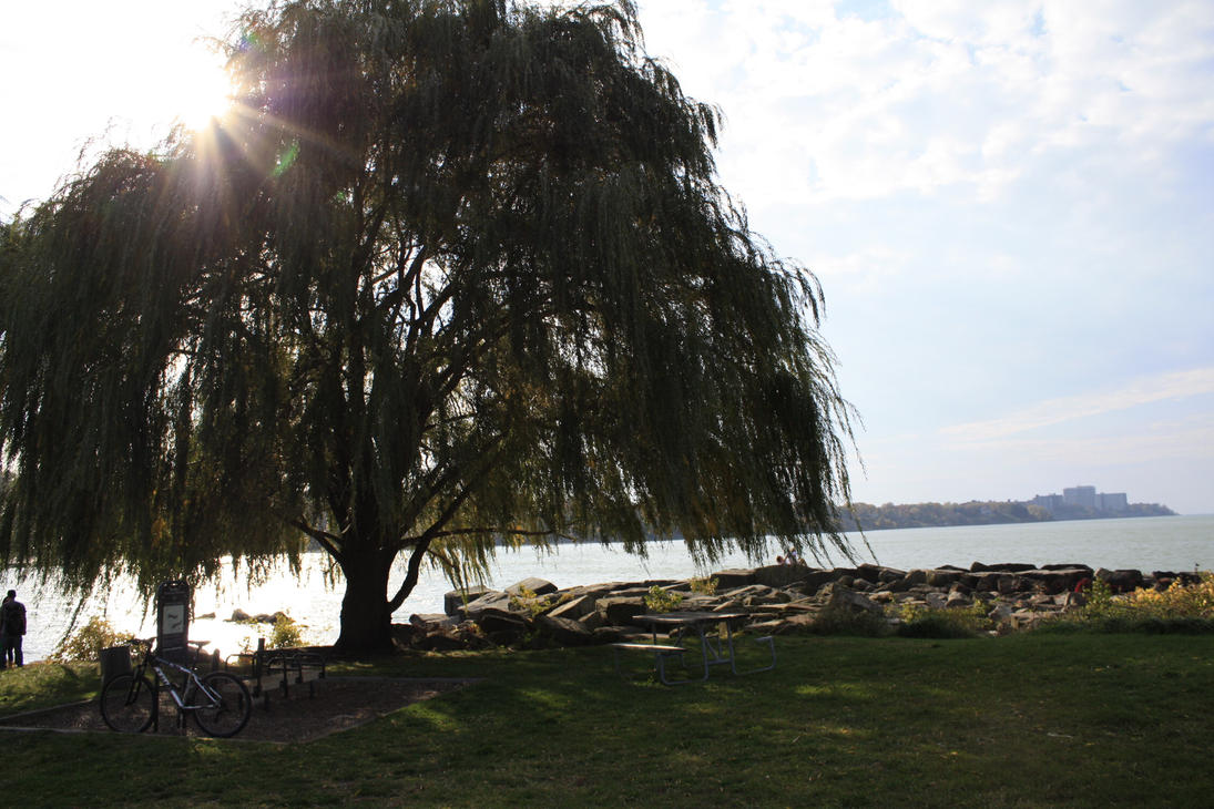 willow lake chat Lake front living in laurel - willow lake apartments is a wonderfully appointed apartment community with an array of resident amenities from our professi.