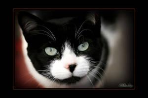 Cat by Mnlo