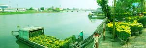 2011 TET holiday - Long Xuyen city by gonnguyen