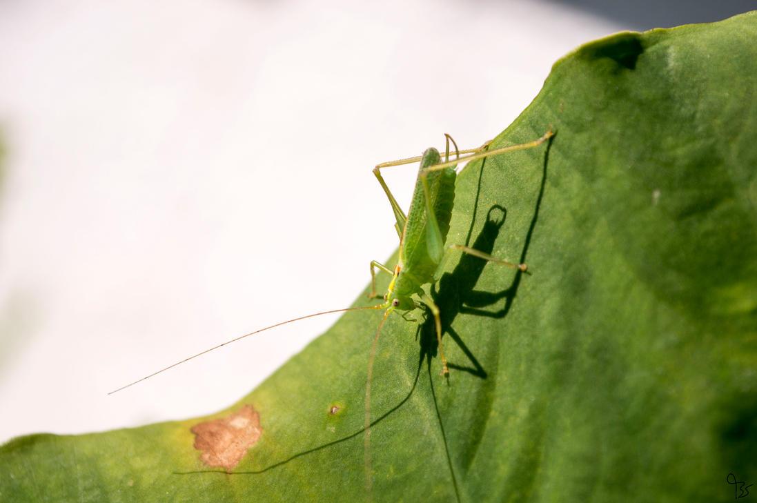 Grasshopper by BS4711