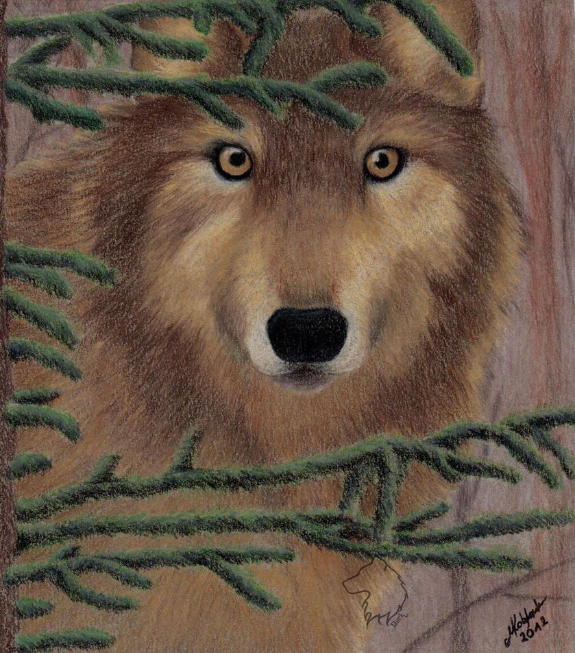 My birthday wolf by Dark-Lioncourt