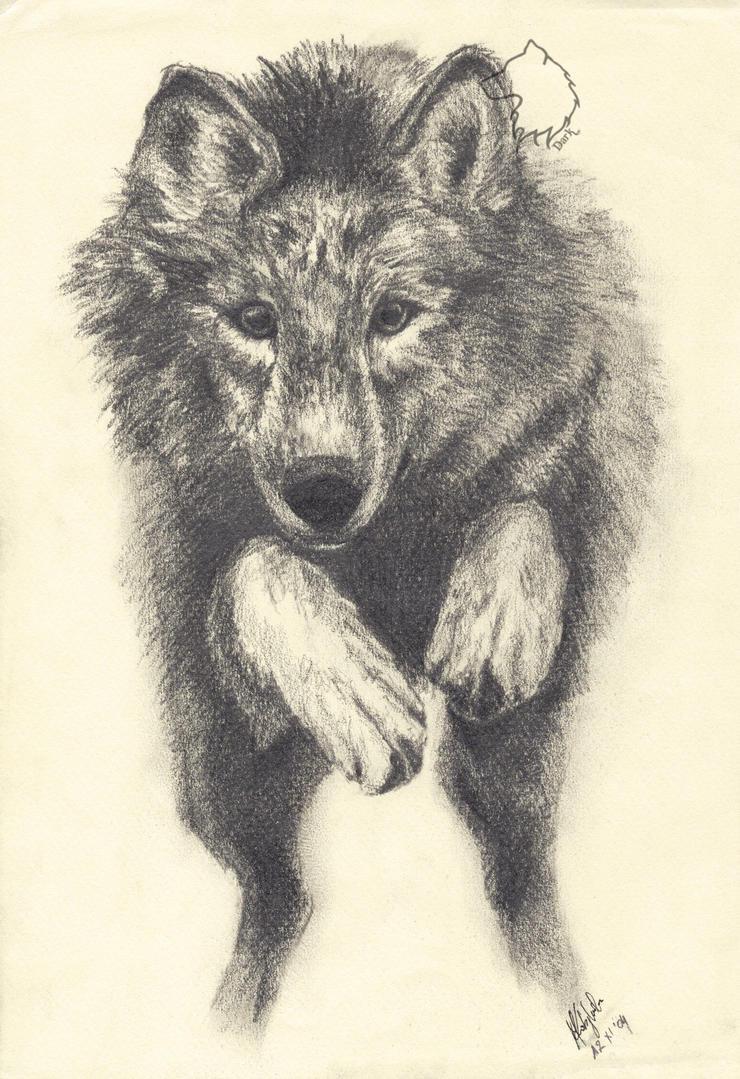 The Wolf by Dark-Lioncourt
