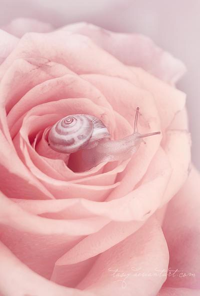small estet by tasiy