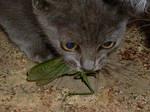 Fioka cat