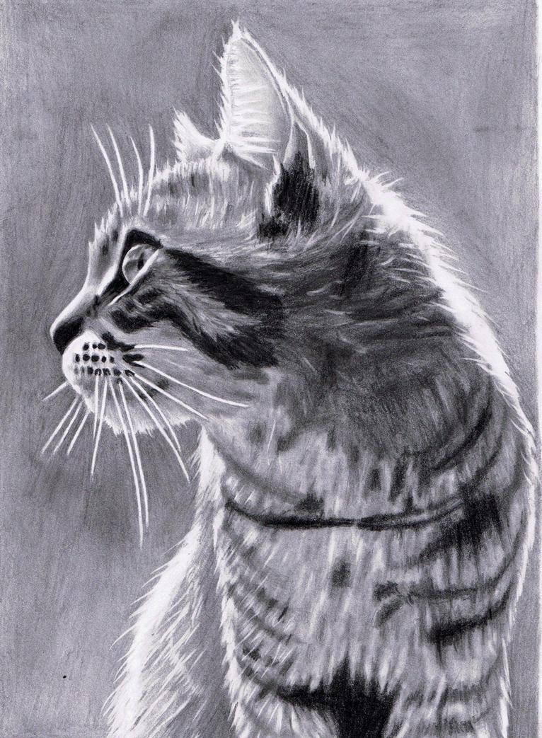 Drawn Mr.Katzor by JasminaSusak