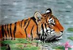 Drawn Tiger in Water by JasminaSusak