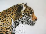 Jaguar-white background