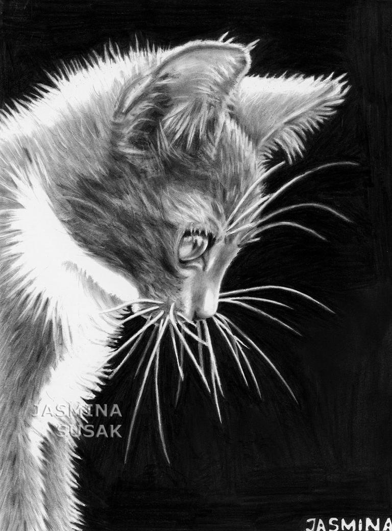 Drawn Kitty by JasminaSusak