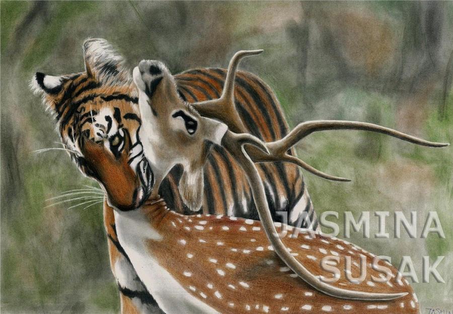 Tiger and his Prey by JasminaSusak