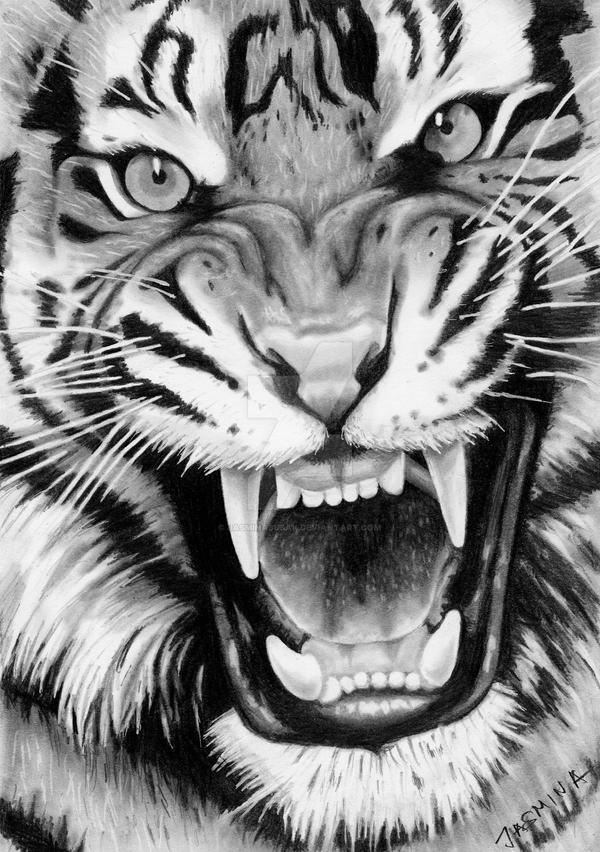 Roaring Tiger - Graphite Drawing by JasminaSusak on DeviantArt  Roaring Tiger -...
