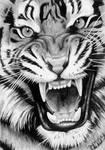 Roaring Tiger - Graphite Drawing