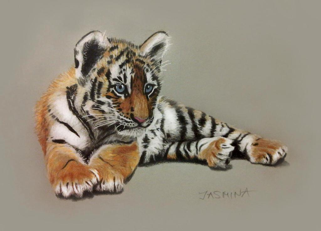 Tiger Cub - Colored Pencils Drawing by JasminaSusak