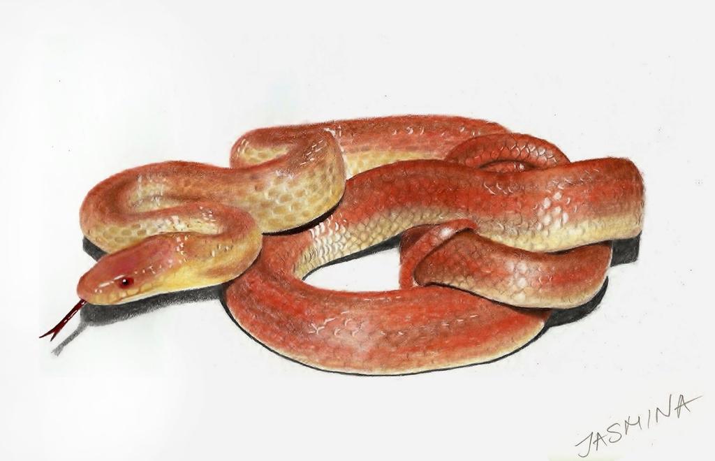 Snake - Colored Pencils Drawing by JasminaSusak