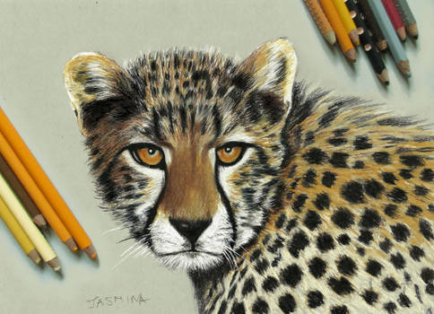 Young Cheetah - colored pencil drawing