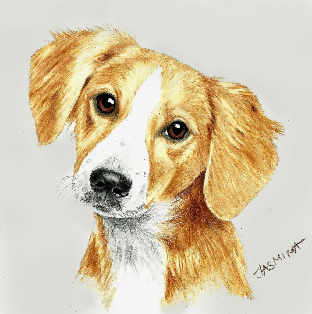 puppy portrait colored pencil drawing by jasminasusak on
