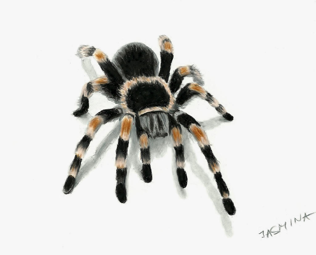 how to draw a tarantula