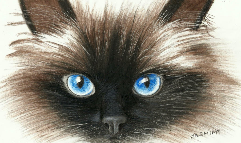 Siamese cat's face in colored pencil by JasminaSusak