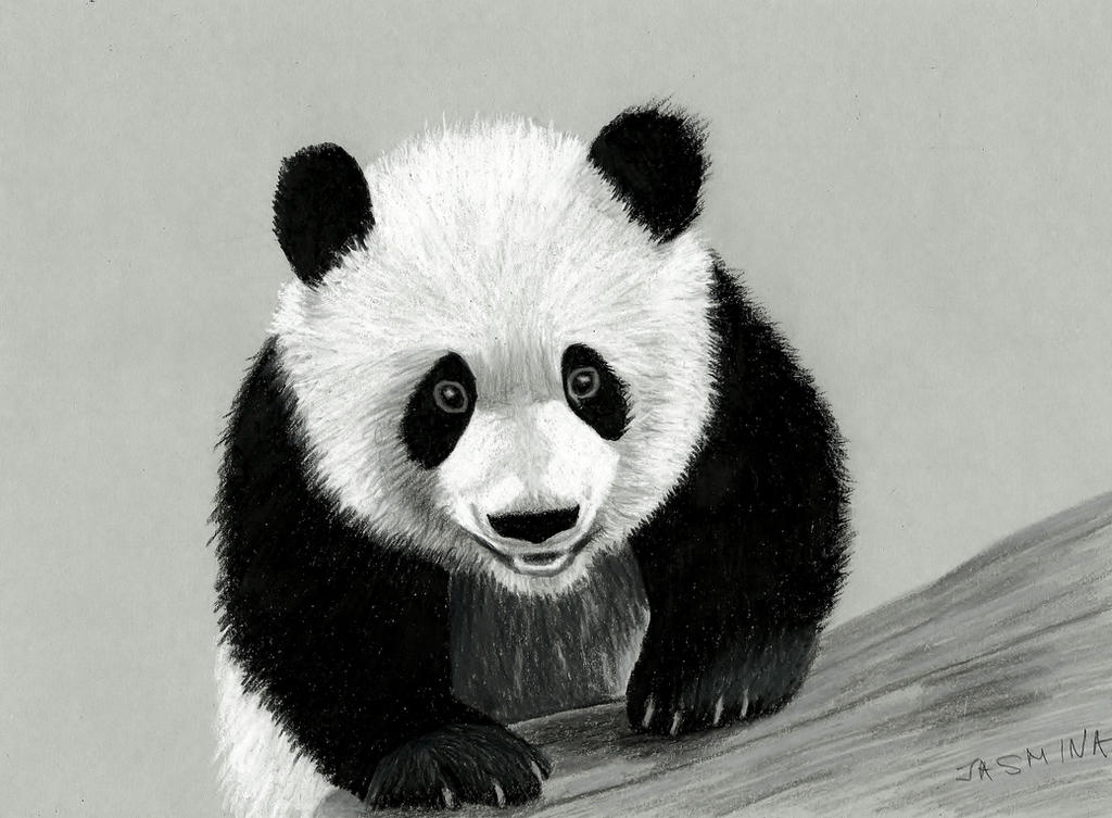 Panda colored pencil drawing by JasminaSusak