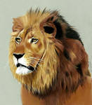 Lion colored pencil drawing