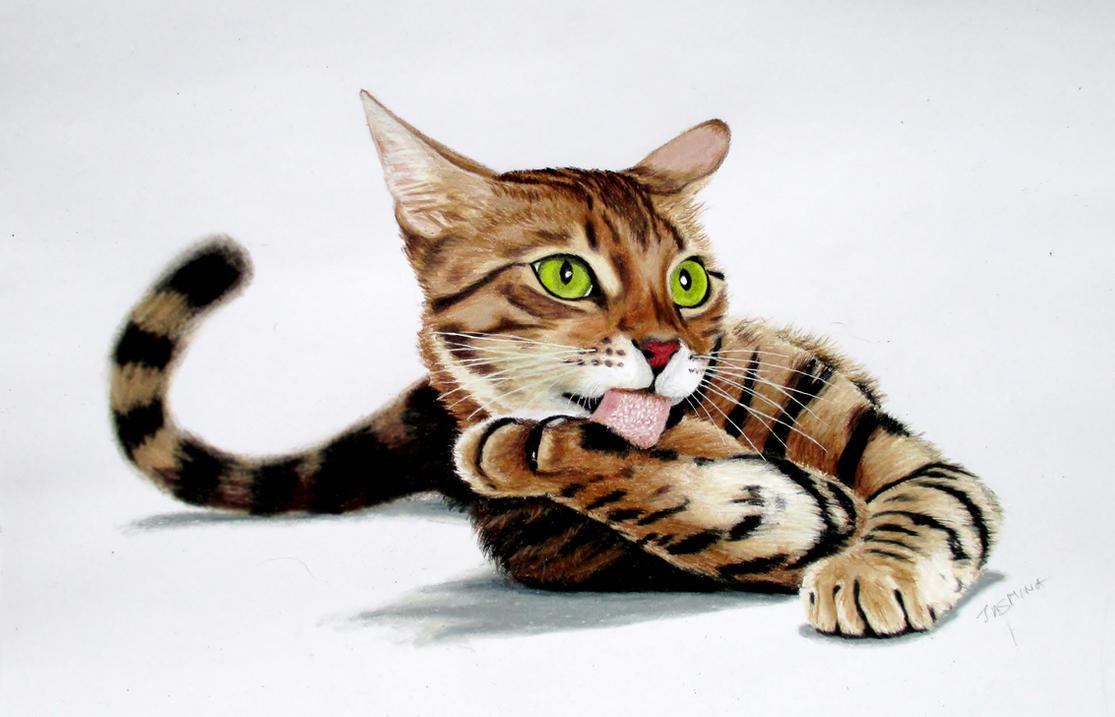 Bengal cat colored pencil drawing by JasminaSusak