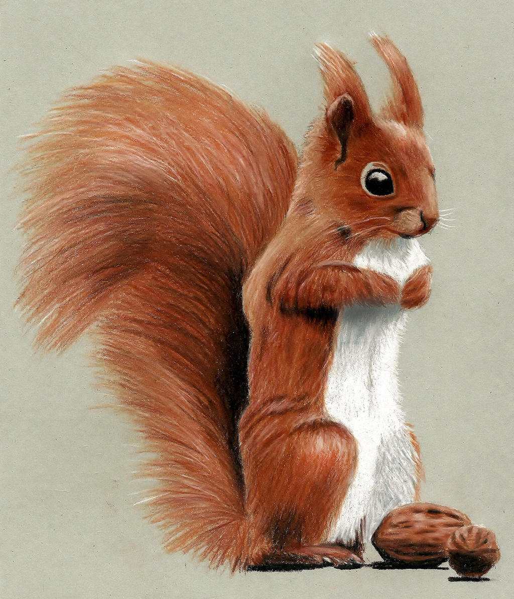 Cute Squirrel Drawing with Colored Pencils by JasminaSusak on