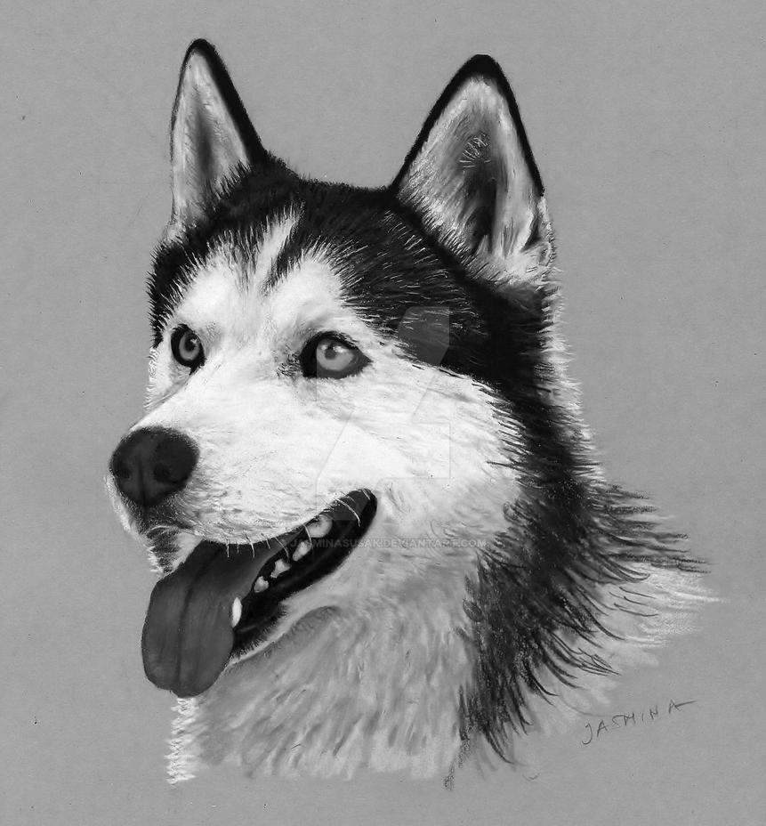 Pencil Drawing: Siberian Husky by JasminaSusak