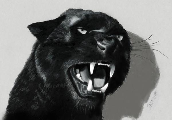 3D Pencil Drawing of Black Panther by JasminaSusak on ...