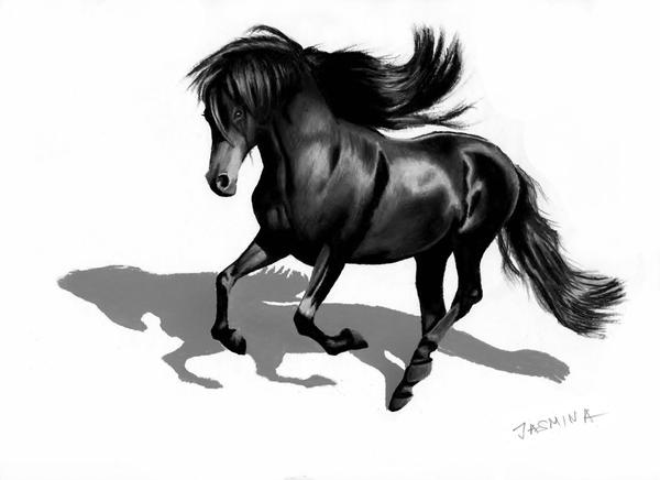 3d pencil drawing black friesian horse by jasminasusak