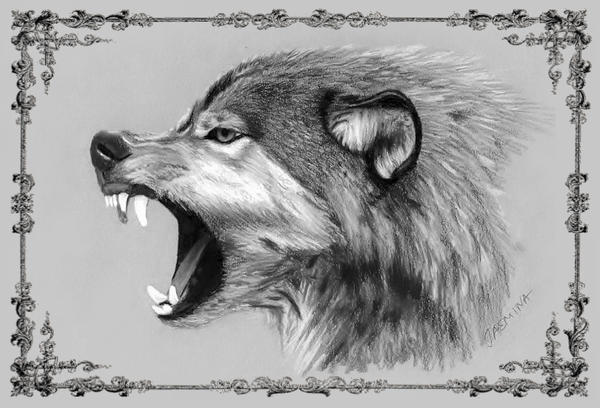 Wolf pencil drawing by jasminasusak