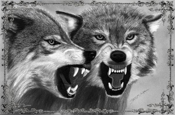 Pencil Drawing: Growling Wolves by JasminaSusak on DeviantArt