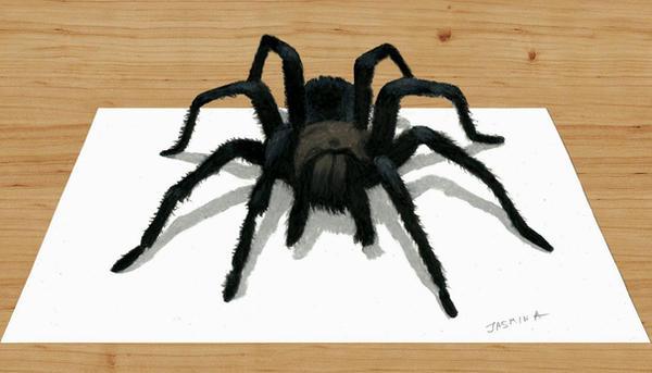 3D Pencil Drawing of Spider by JasminaSusak