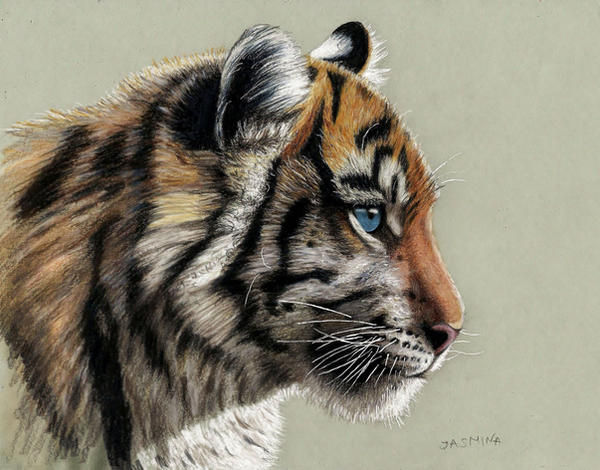 Colored Pencil Drawing of Tiger Cub