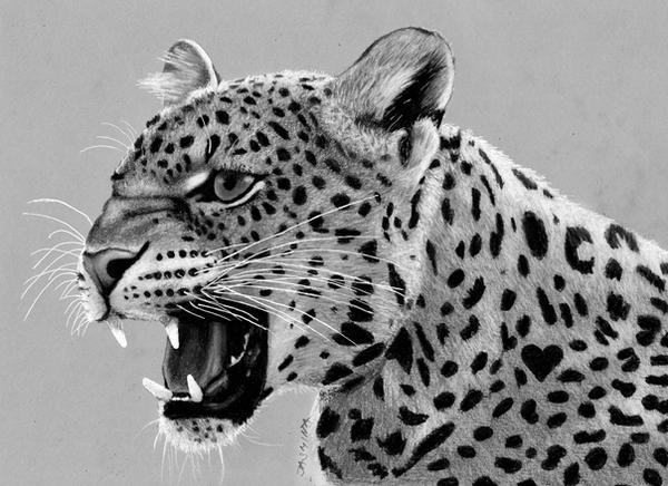 Leopard Pencil Drawings Pencil Drawing of Leop...