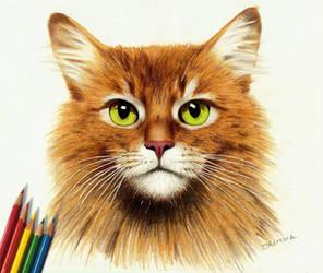 Colored Pencil Drawing: Somali Ginger Cat by JasminaSusak