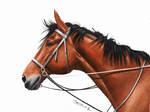 Colored Pencil Drawing: Horse by JasminaSusak