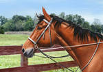Colored Pencil Drawing: Horse (with background)